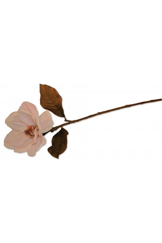 Blüte, Magnolie, creme,...